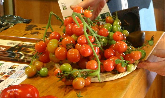 tomato05555